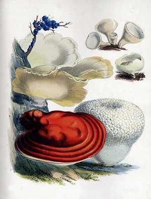 Reproducción de los hongos