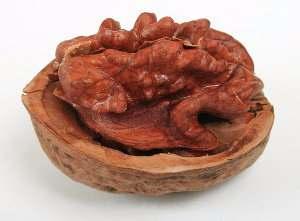 Nueces, fruto del nogal