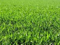 Hierbas o plantas herbáceas