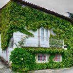 10 plantas trepadoras decorativas para vayas y muros