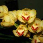 Orquideas: Hábitat, tipos de crecimiento, reproducción, hoja y flor