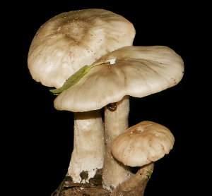 Taxonomía de los hongos y setas