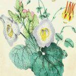 Angiospermas – plantas con flores con máxima evolución del reino Plantae