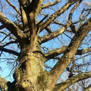 Árboles de hoja caduca, caducifolios