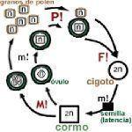 Polinización, conceptos y tipos o formas