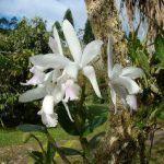 Plantas de exterior, características, cuidados y tipos