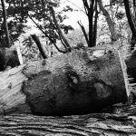 Deforestación. Conceptos y causas y consecuencias más relevantes