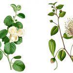Plantas nocturnas: floración durante la noche y polinización, ejemplos