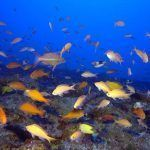 Red trófica de ecosistemas hídricos, características y niveles tróficos