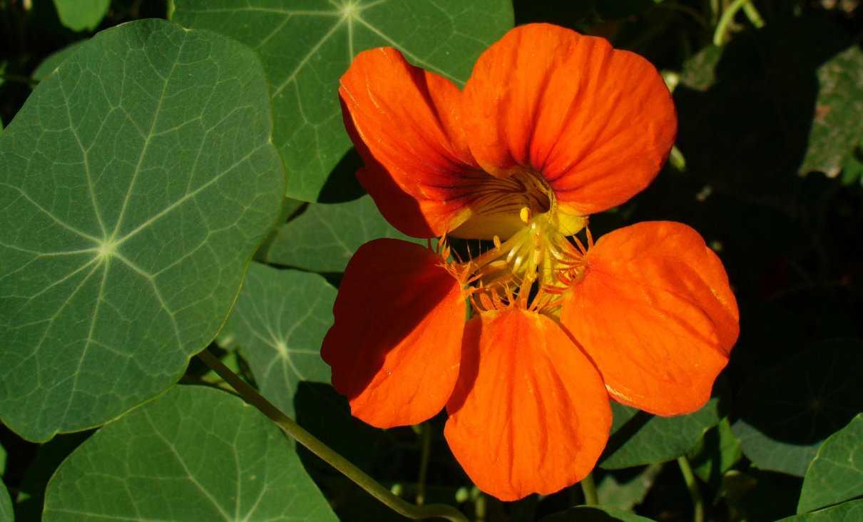 Floración de las plantas