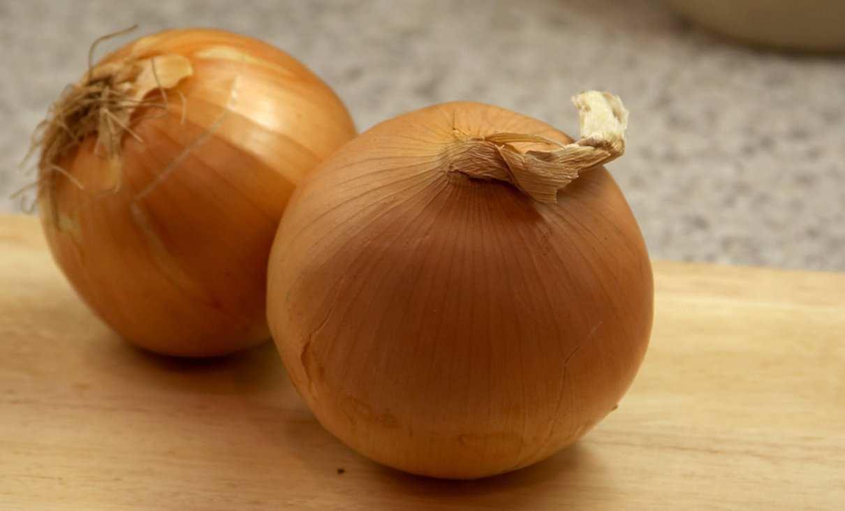 Cebolla, Allium cepa