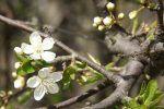 Angiospermas: plantas con flores con máxima evolución del reino Plantae