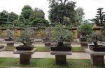 Bonsái - recrea un diminuto árbol natural en un macetero