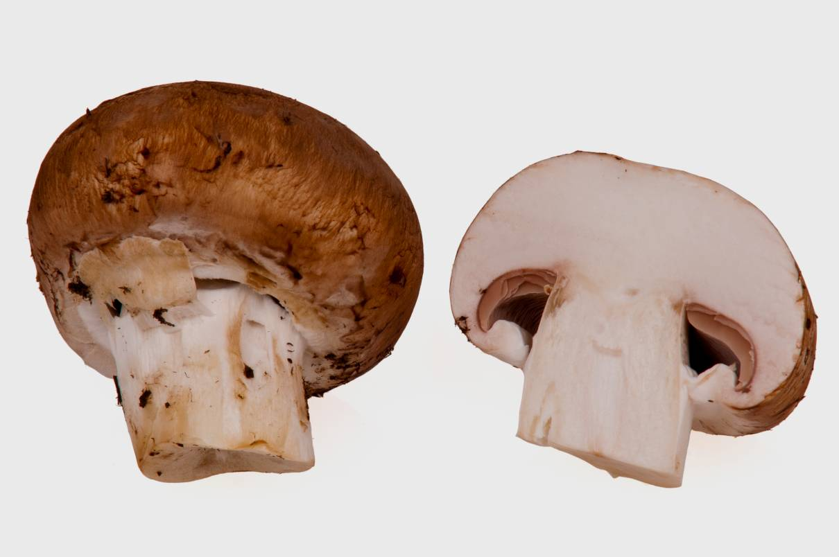 Champiñones, Agaricus bisporus