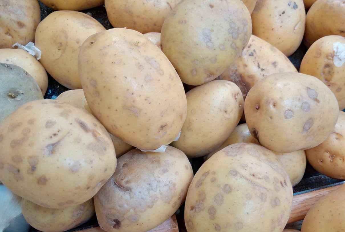 Patata, Solanum tuberosum