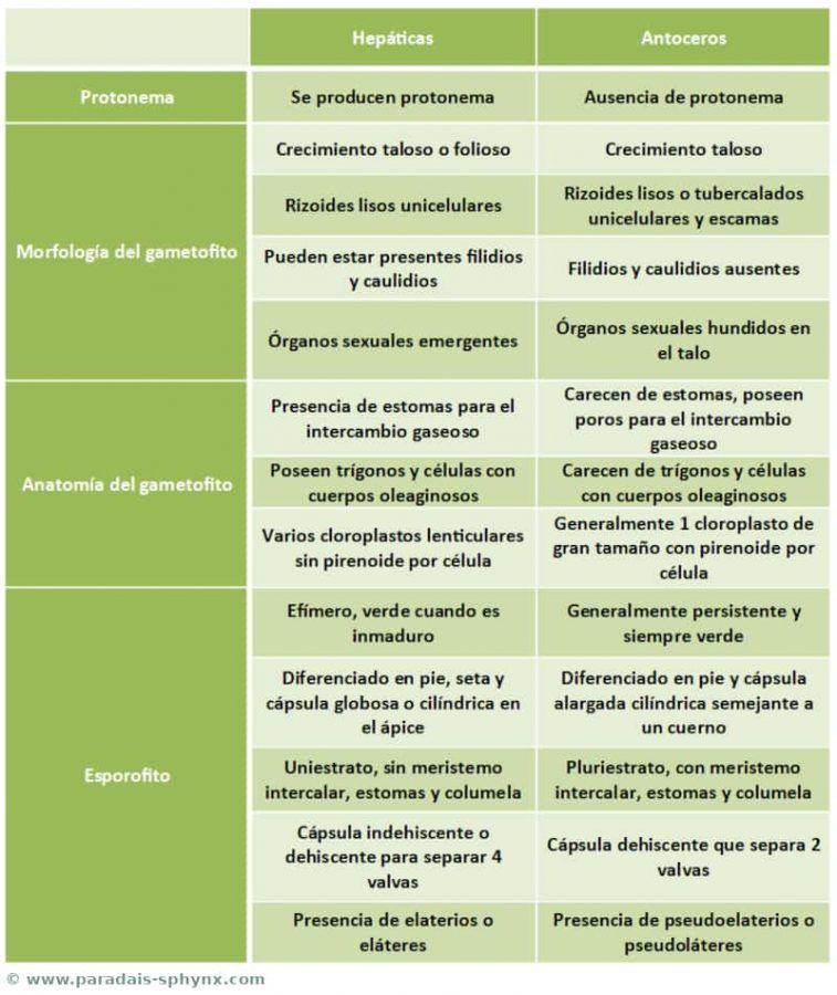 Cuadro comparativo, esquema, resumen con las diferencias entre hepáticas y antoceros