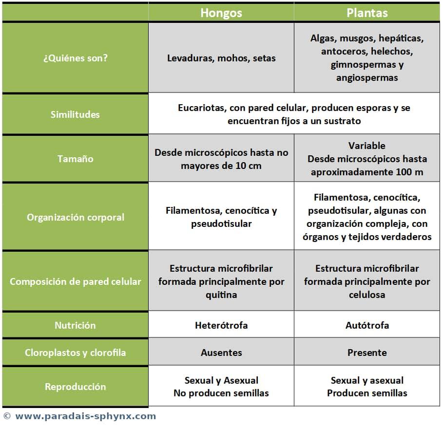 Diferencias entre hongos y plantas, también similitudes
