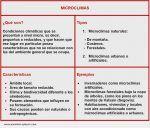 Microclimas, qué son, características, tipos y ejemplos